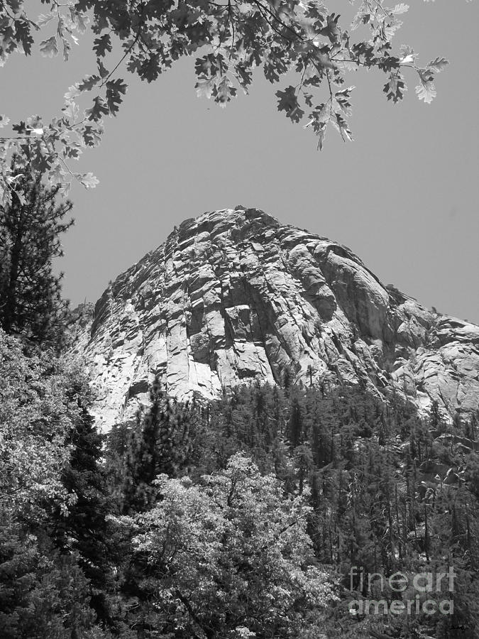 Lily Rock In Black And White Photograph