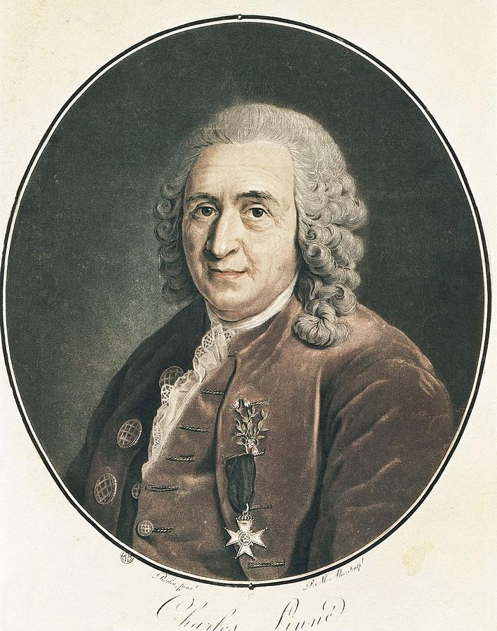 carolus linnaeus The list is released each year to honor the may 23 birthday of carolus linnaeus,  an 18th-century swedish botanist who is considered the father of modern.