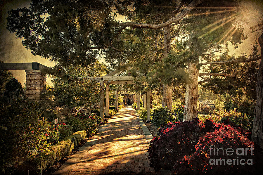 Linnaeus Teaching Garden Photograph  - Linnaeus Teaching Garden Fine Art Print