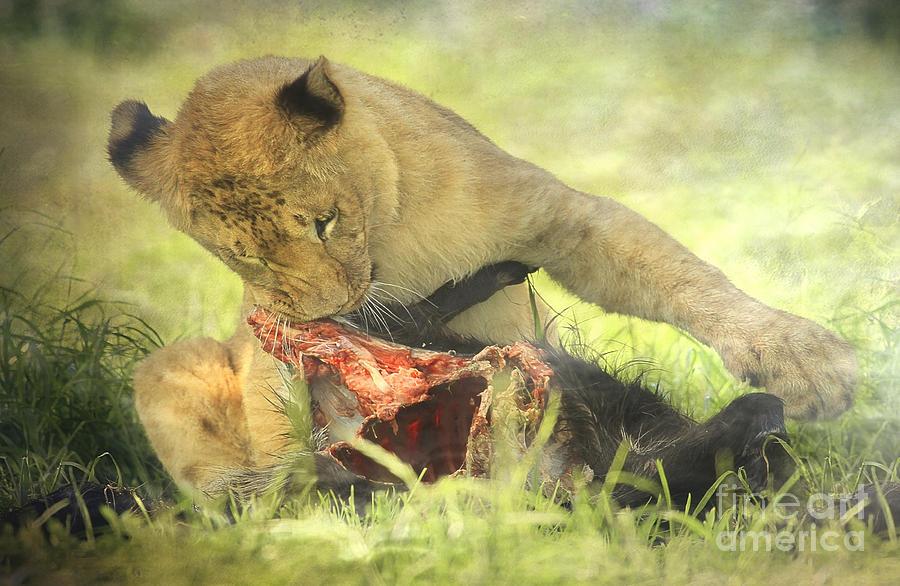 Lion Cub II Photograph