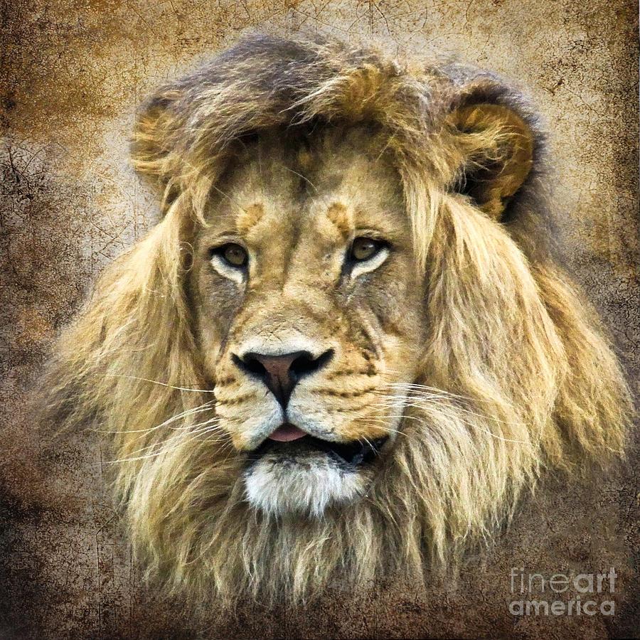 Lion King Photograph