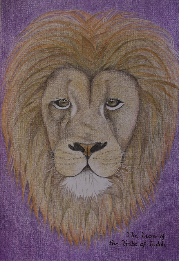 Lion Drawing - Lion Of The Tribe Of Judah by Carol De Bruyn