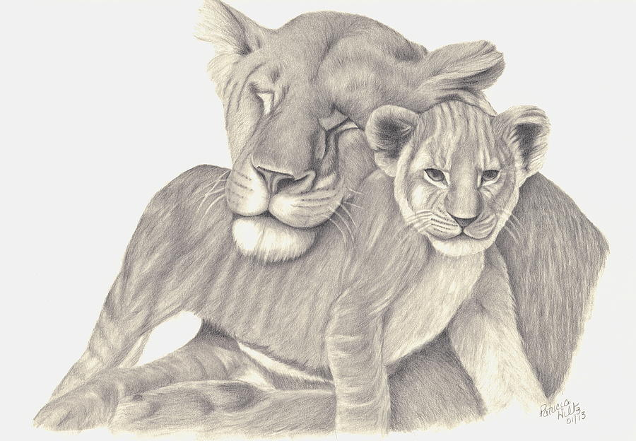 Lioness Drawings - Lio...