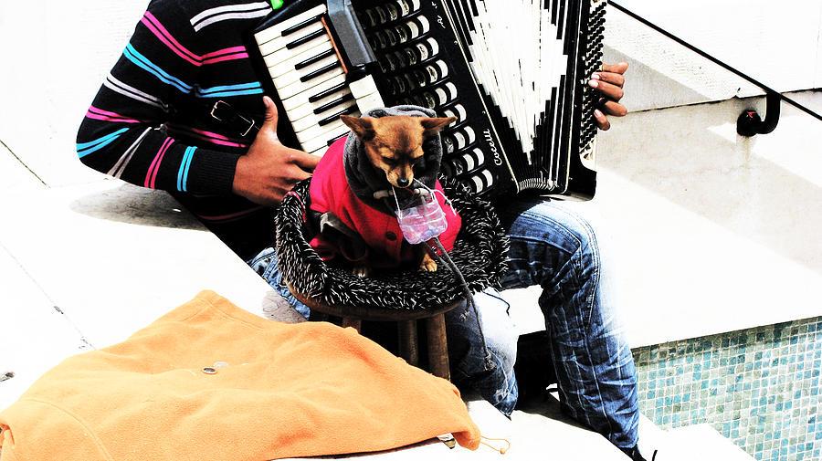 Dog Photograph - Lisbona Dog by Alice Gardoni