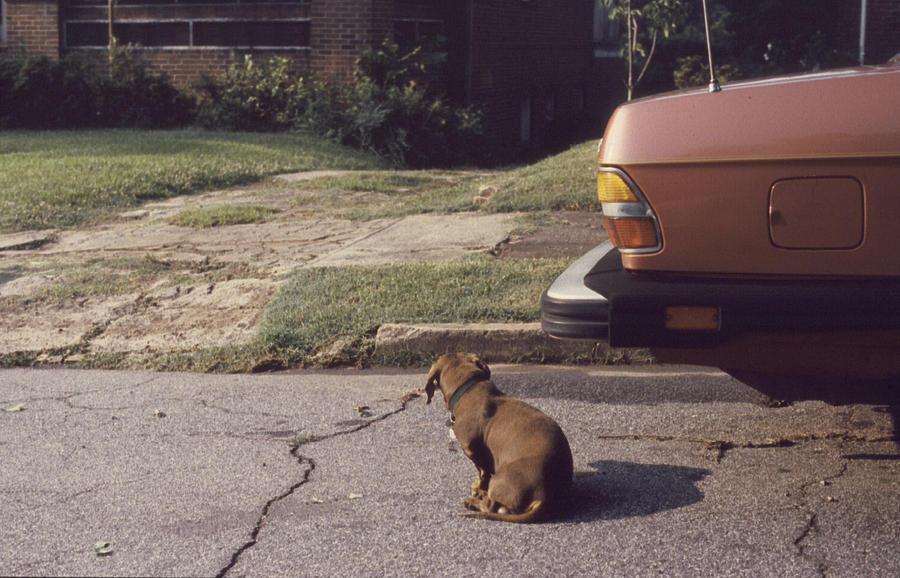 Little Brown Dog Photograph