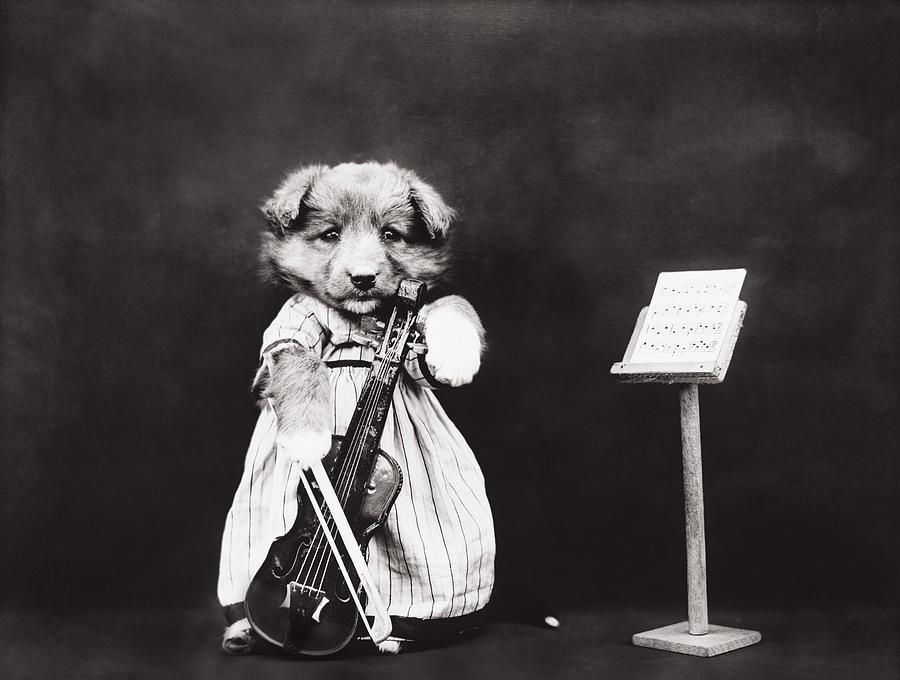 Little Fiddler Photograph