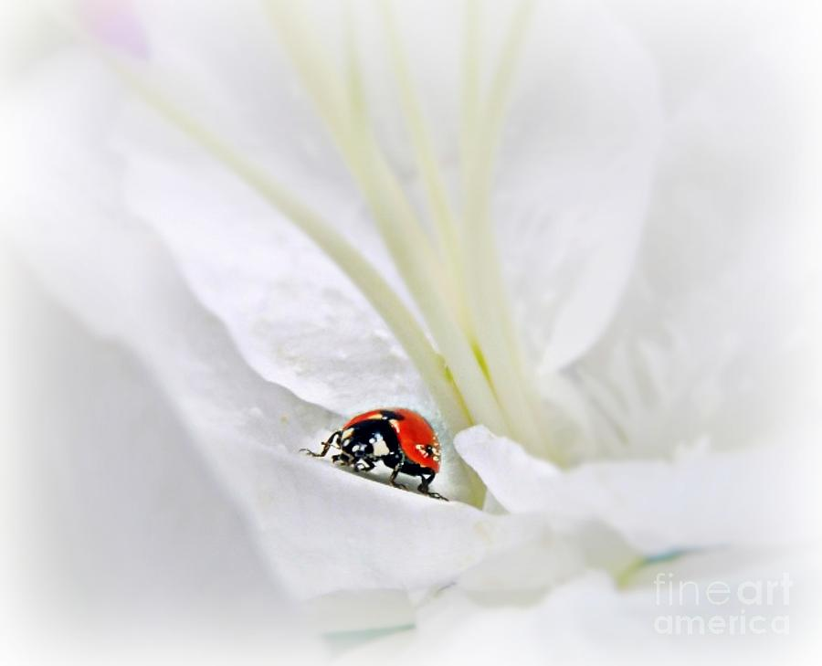 Little Ladybug Mixed Media  - Little Ladybug Fine Art Print