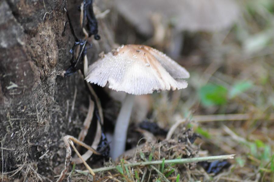 Little Mushroom Photograph
