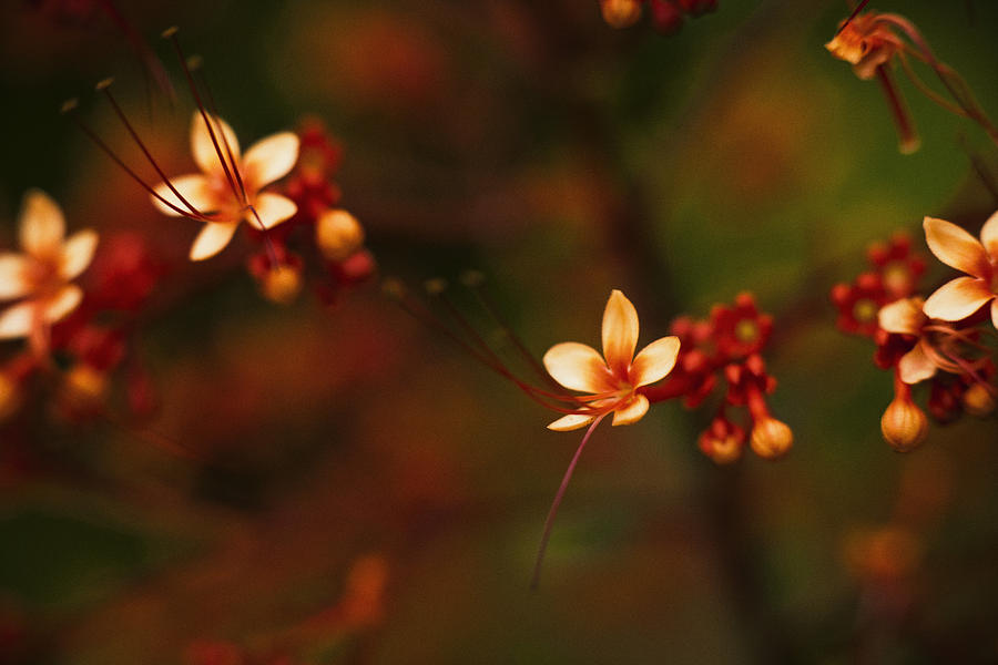 Little Red Flowers Photograph