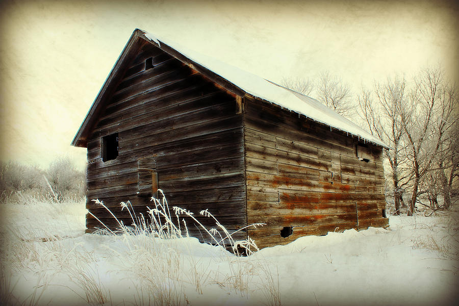 Little Shed Photograph  - Little Shed Fine Art Print
