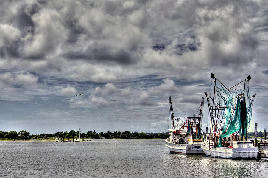 Little Shrimpers   Photograph  - Little Shrimpers   Fine Art Print