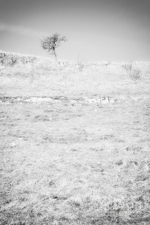 Little Tree On The Hill - Black And White Photograph