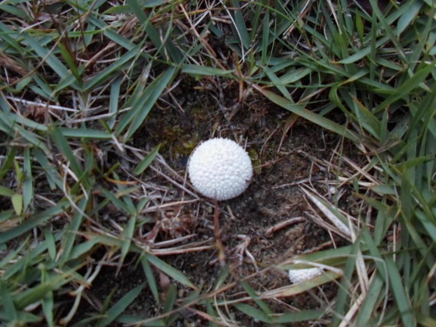 Little White Mushroom Photograph