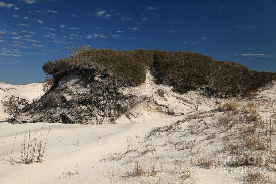 Lively Dunes Photograph