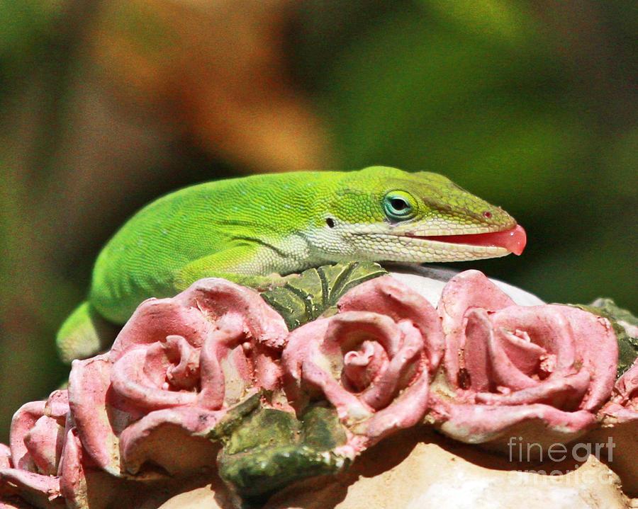 Lizard French Kiss Photograph by Luana K Perez