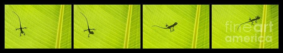 Lizard Photograph - Lizards by Tim Gainey