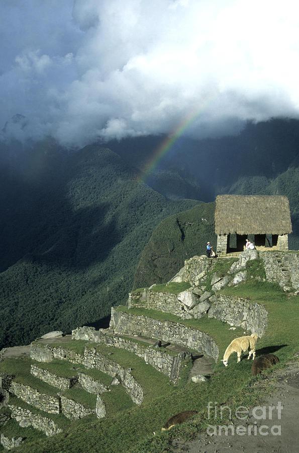 Llama And Rainbow At Machu Picchu Photograph