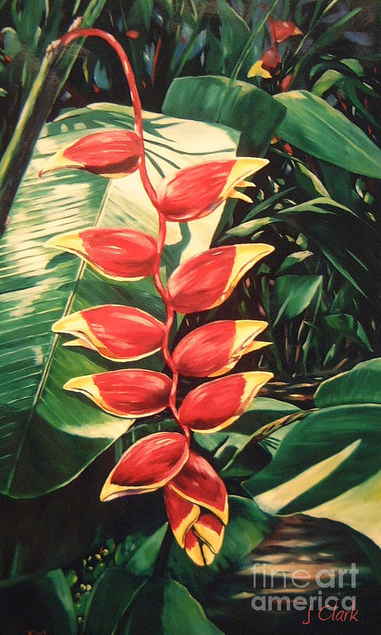 Lobster Claw Heliconia Painting  - Lobster Claw Heliconia Fine Art Print