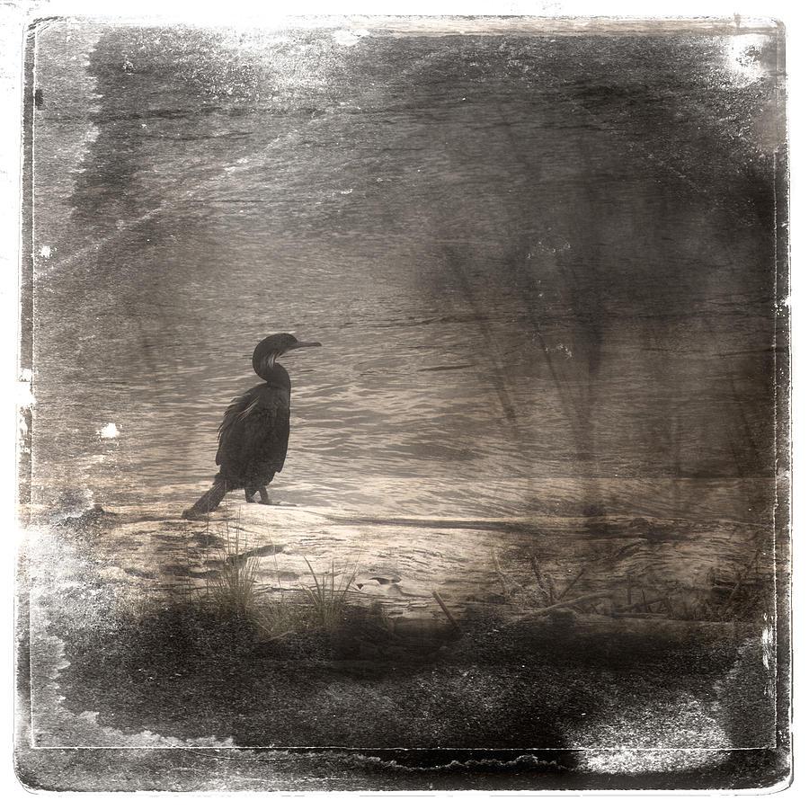 Cormorant Photograph - Lone Cormorant by Carol Leigh
