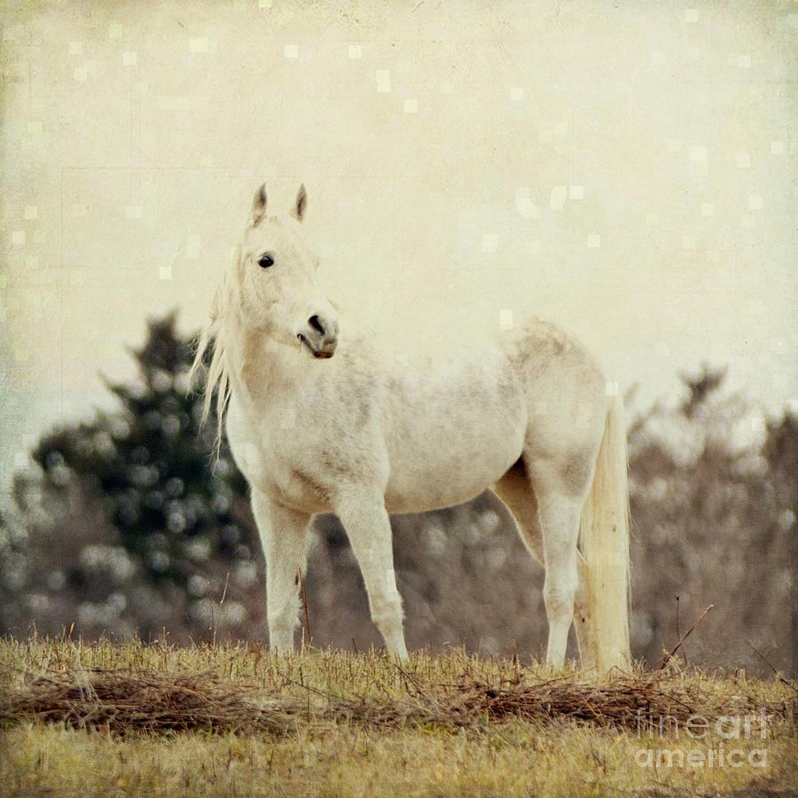 Lone Horse Photograph