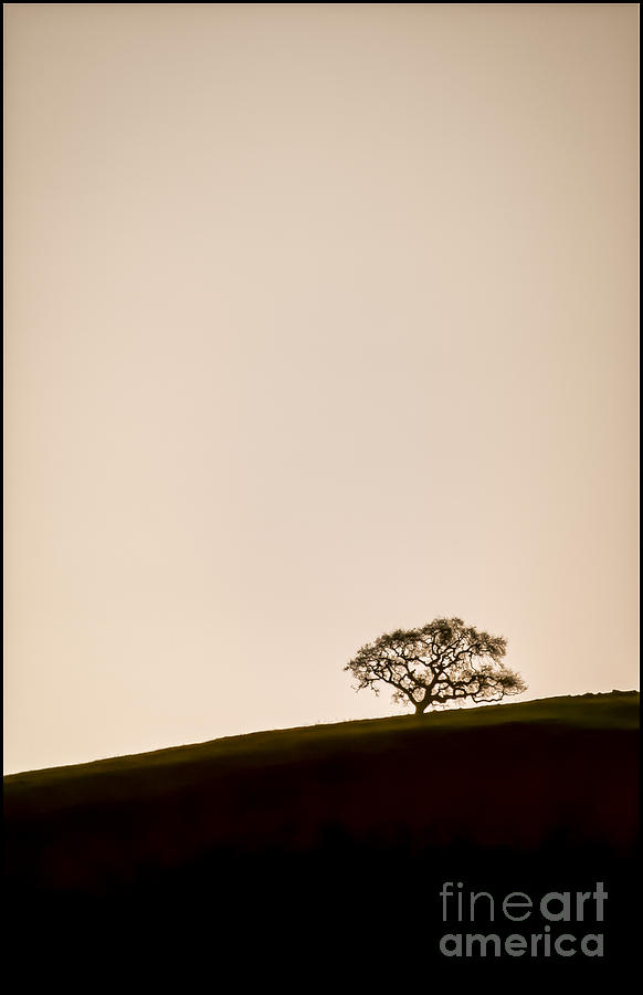 Black & White Photograph - Lone Oak Tree by Holly Martin