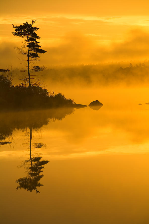 Lone Pine And Misty Lake At Dawn Photograph