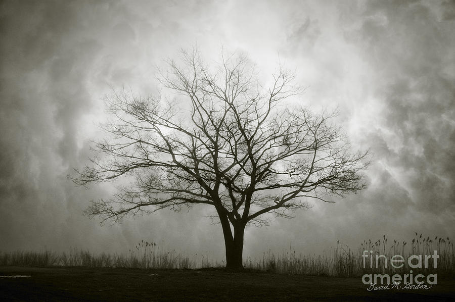 Lone Tree And Clouds Photograph