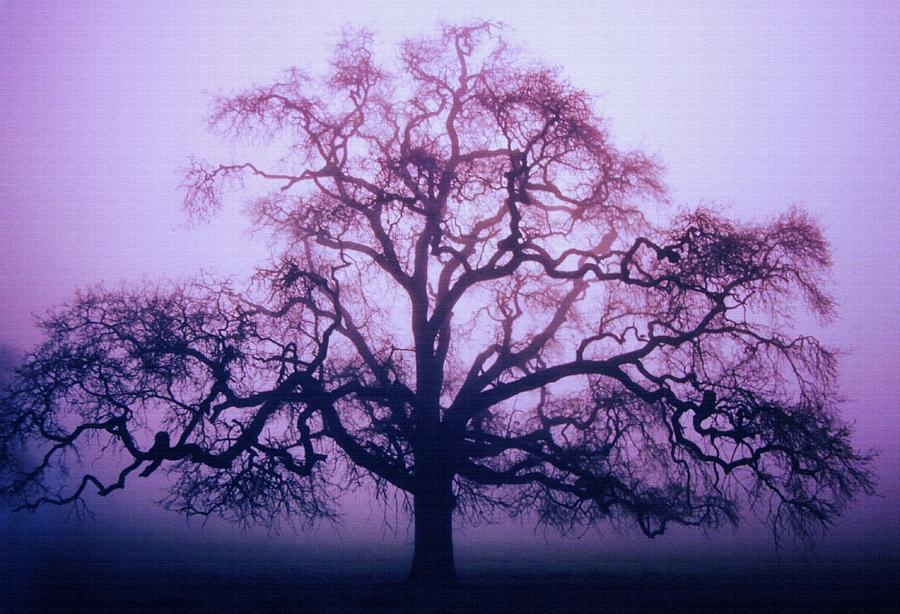 Lone Tree Dream - Purple Photograph