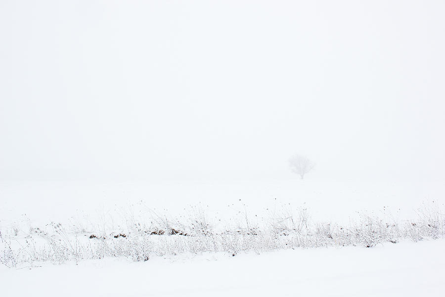 Lone Tree In Snow Photograph