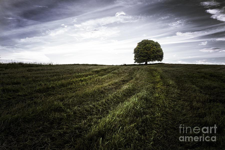 Big Sky Photograph - Lone Tree  by John Farnan