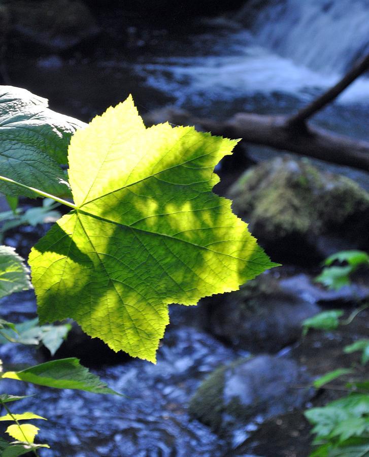 Leaf Photograph - Lonely Me by Amanda Eberly-Kudamik