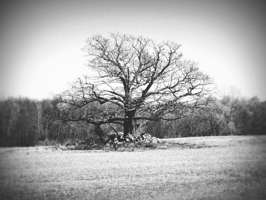 Lonely Black And White Lonely Tree In ...