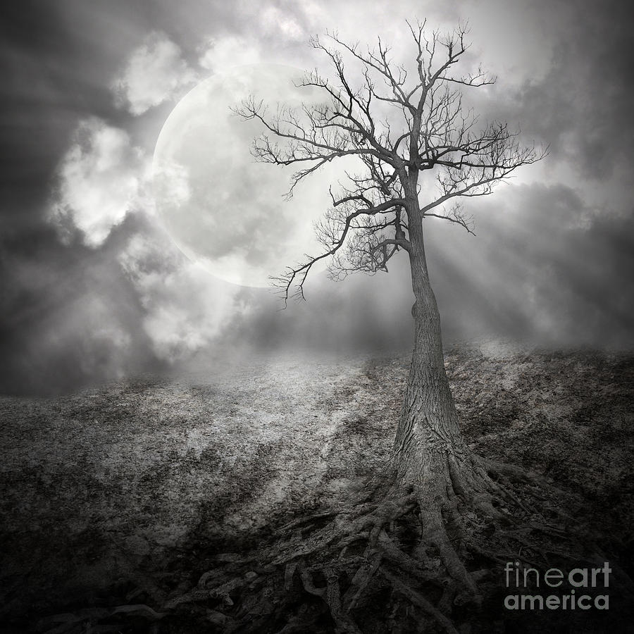 Lonely Tree With Roots Holding The Moon Photograph