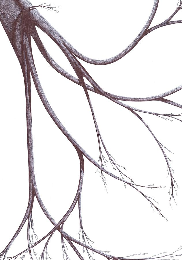 Long Branches Drawing