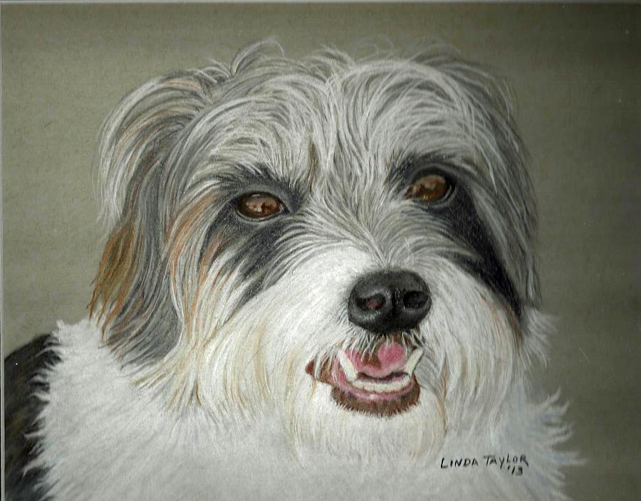 Jack Russell Long Hair Long hair jack russell terrier