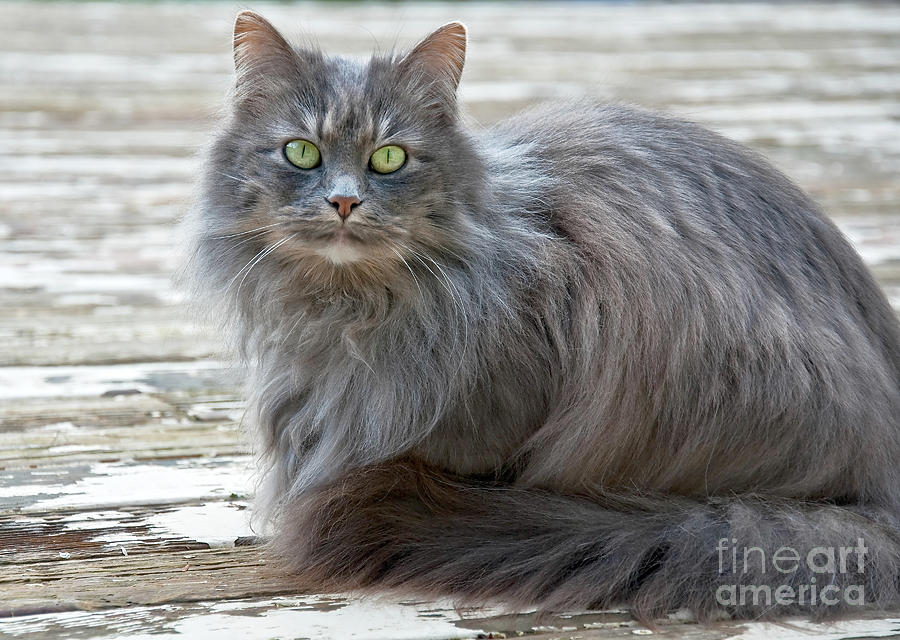 cats with kidney disease