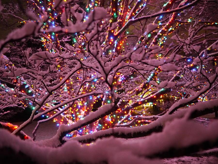 Gardens Photograph - Longwood Lights 1 by Richard Reeve