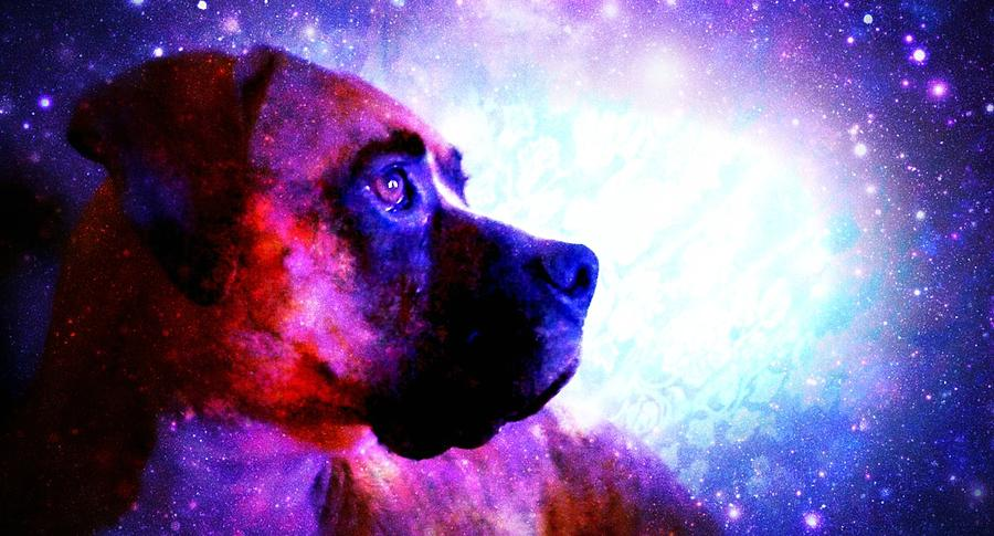 Boxer Photograph - Look To The Stars by Kaylee Vergilio