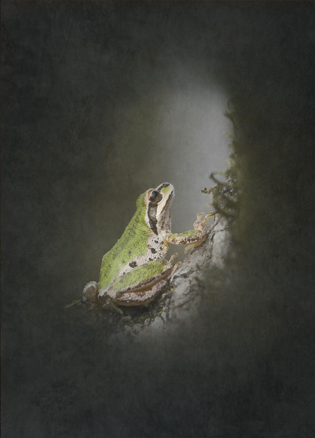 Frog Photograph - Looking Up by Angie Vogel