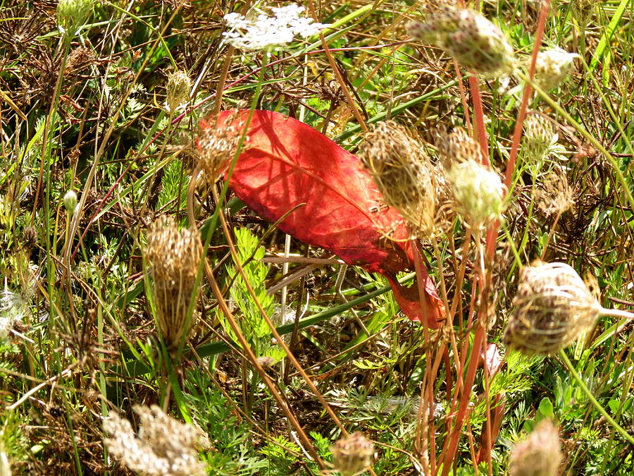 Lost Leaf Photograph