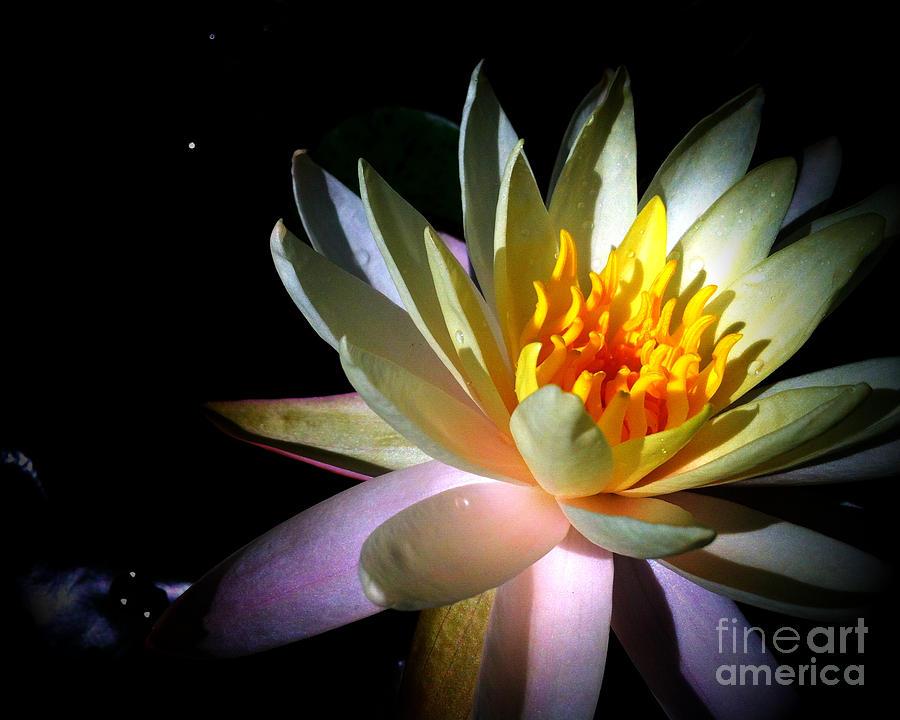 Famous Flower Paintings Lotus Flower Painting