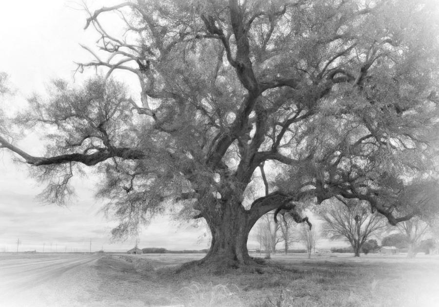 Louisiana Dreamin Monochrome Photograph