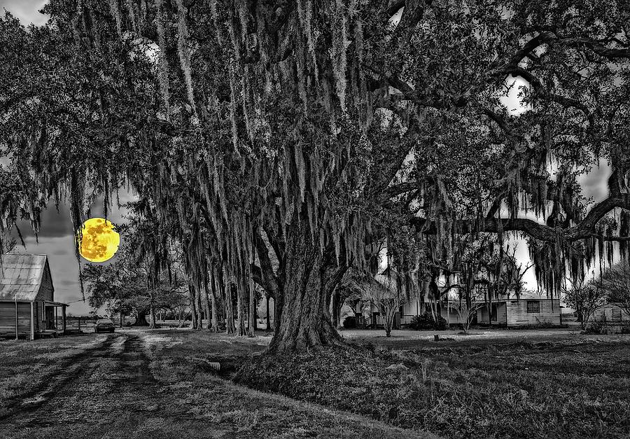 Louisiana Moon Rising Monochrome 2 Photograph  - Louisiana Moon Rising Monochrome 2 Fine Art Print