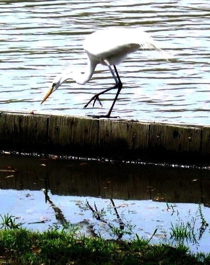 Louisiana Wildlife Photograph