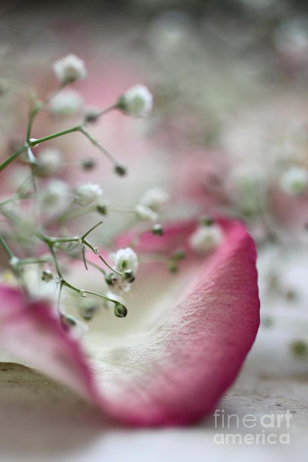 Love Macro Close Up Flowers Roses Nature Photography Art Photograph - Love by AR Annahita