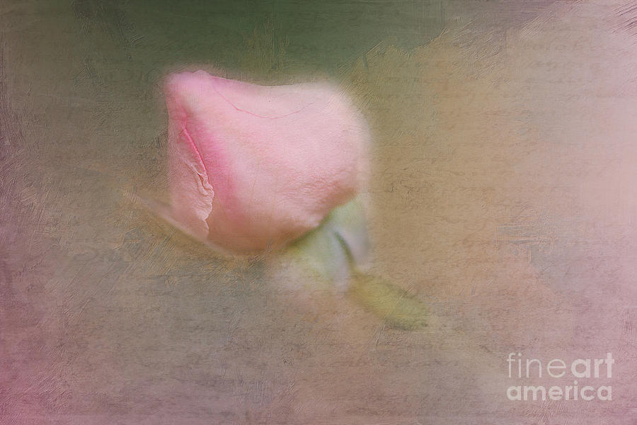 Love In Bloom  Photograph  - Love In Bloom  Fine Art Print