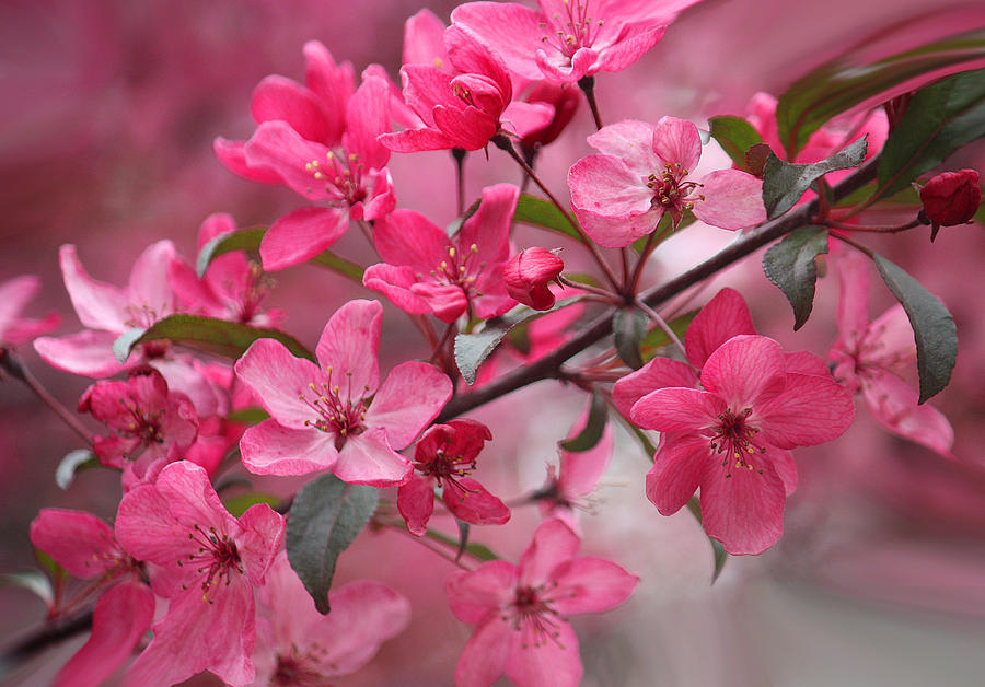 Amazing Flowers Photograph - Love Is Eternal by  The Art Of Marilyn Ridoutt-Greene