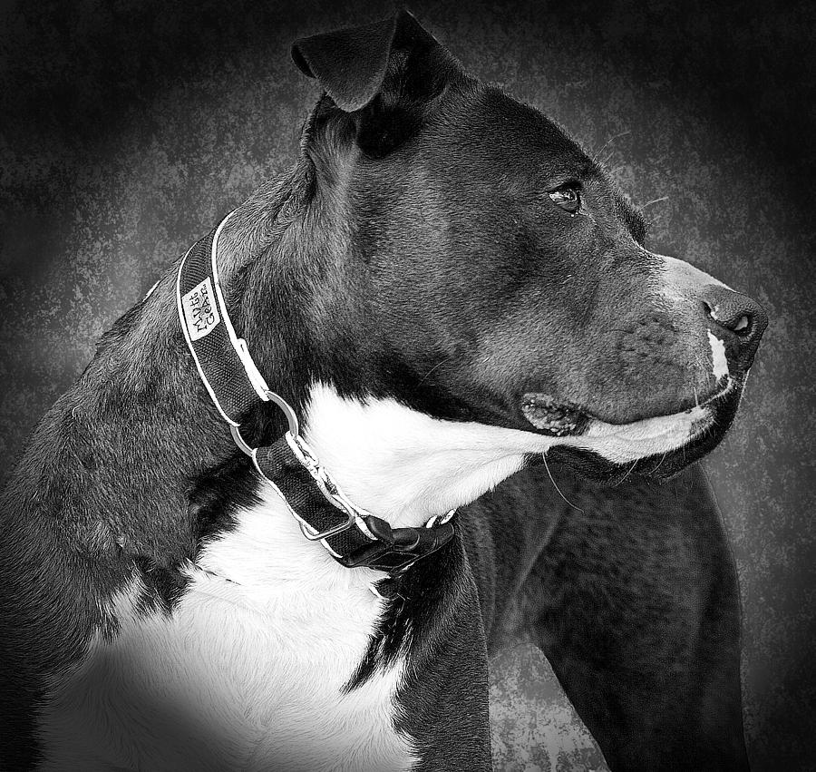 Dog Photograph - Love Me by Camille Lopez