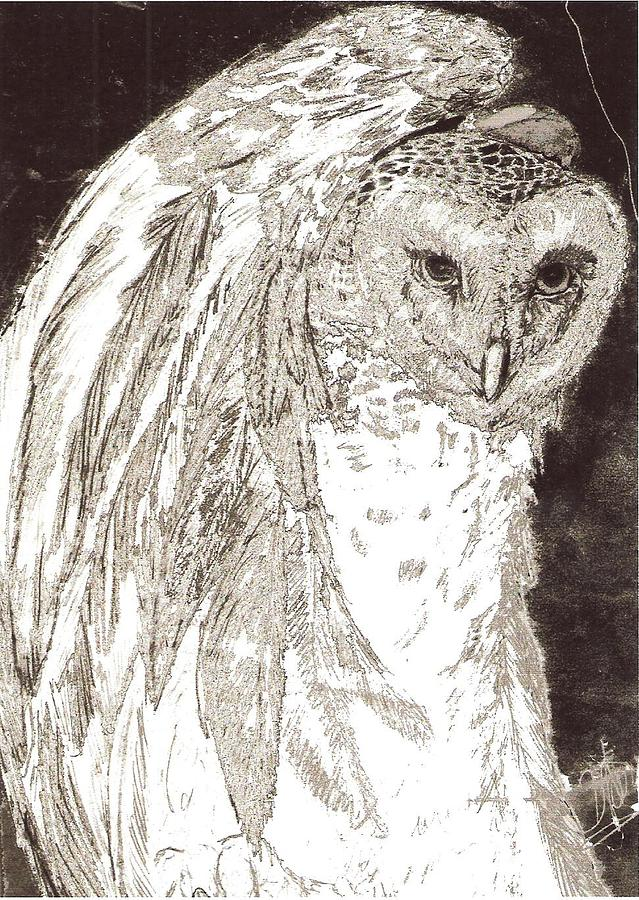 Love Owl Drawing  - Love Owl Fine Art Print
