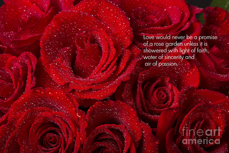 Love Would Never Be A Promise Of A Rose Garden Photograph  - Love Would Never Be A Promise Of A Rose Garden Fine Art Print